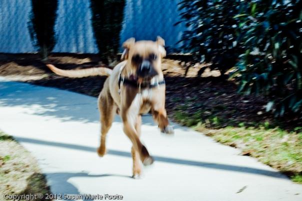 Bubba Rex (aka Dexter 66007)