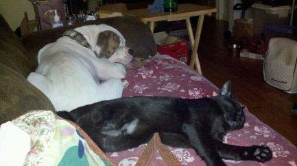 Evening nap buddies