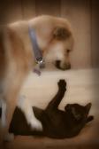 Sookie-2012-07-19-20120719_3198
