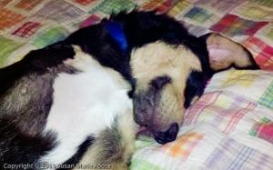 sleeping sweet dog
