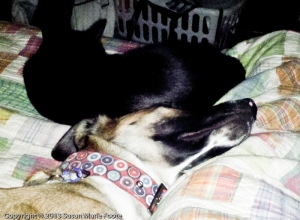 cat and dog sleeping together