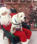 Look, look, Santa says I AM a lap dog.