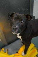 Cubby (WCAC ID: 103142)