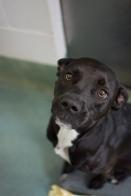 Sasha (WCAC ID: 60851)