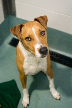 Jimmy (WCAC ID: 105015)