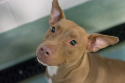 Dutchess (WCAC ID: 94388)