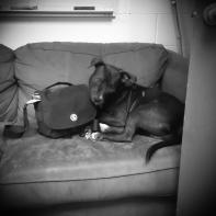 Cubby likes my bag.
