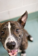 Chester (WCAC ID: 107251)