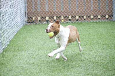 Cheech (WCAC ID: 97955)