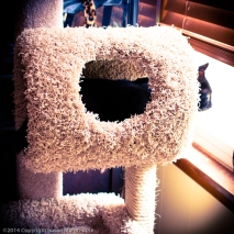 TicTac-Cat-Tree_20140904_0262