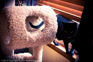 TicTac-Cat-Tree_20140904_0266