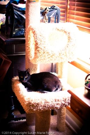 TicTac-Cat-Tree_20140904_0274