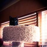 TicTac-Cat-Tree_20140904_0277