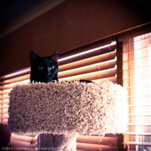 TicTac-Cat-Tree_20140904_0277