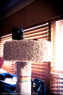 TicTac-Cat-Tree_20140904_0280