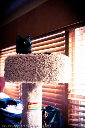 TicTac-Cat-Tree_20140904_0280