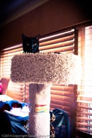 TicTac-Cat-Tree_20140904_0281