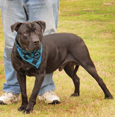 Tyson (WCAC ID: 101250)