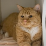 Brody (WCAC ID: 118292)