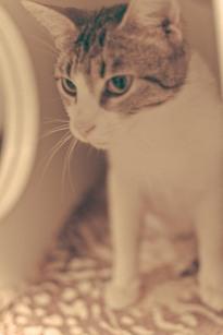 Penelope (WCAC ID: 118364)