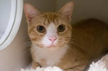 Handsome Hendricks (WCAC ID: 118365)