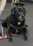 CGC at Teamworks Dog Training