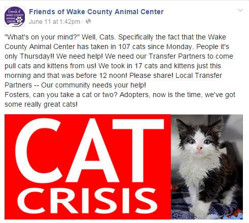 WCAC Cat Crisis