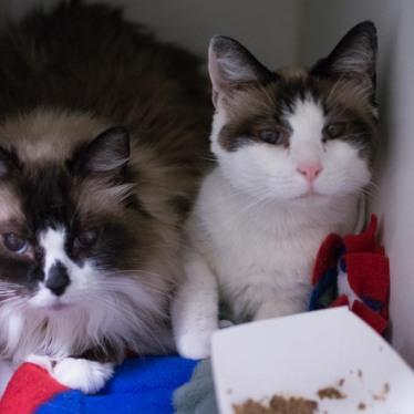 Saffie (ID: 133602) & Maggie (ID: 133601)