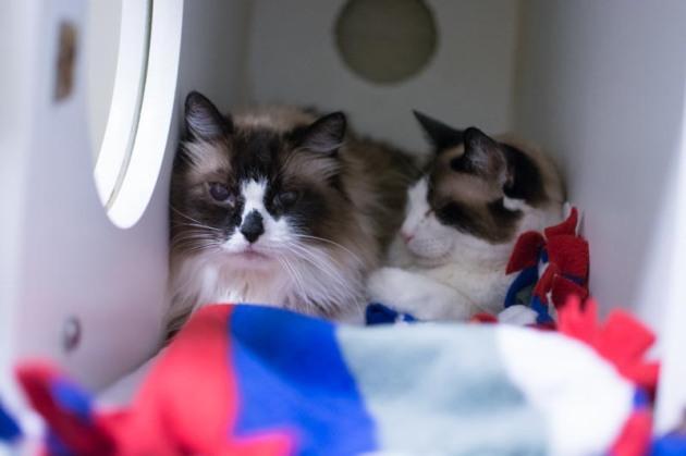 Saffie  & Maggie have been rescued.